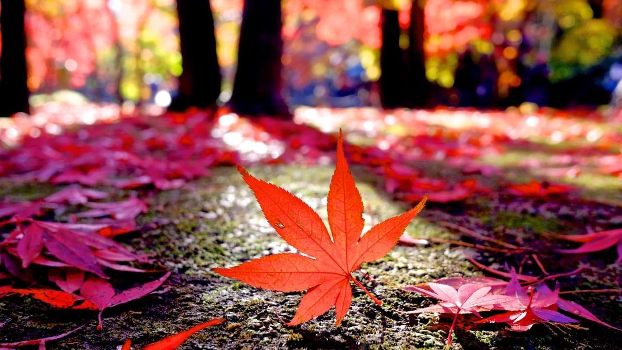 松本市紅葉