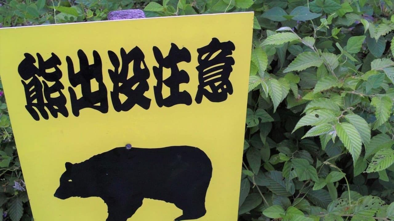 小梨平キャンプ場クマ